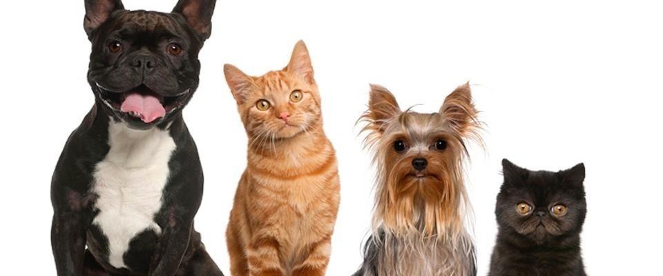 veterinario como