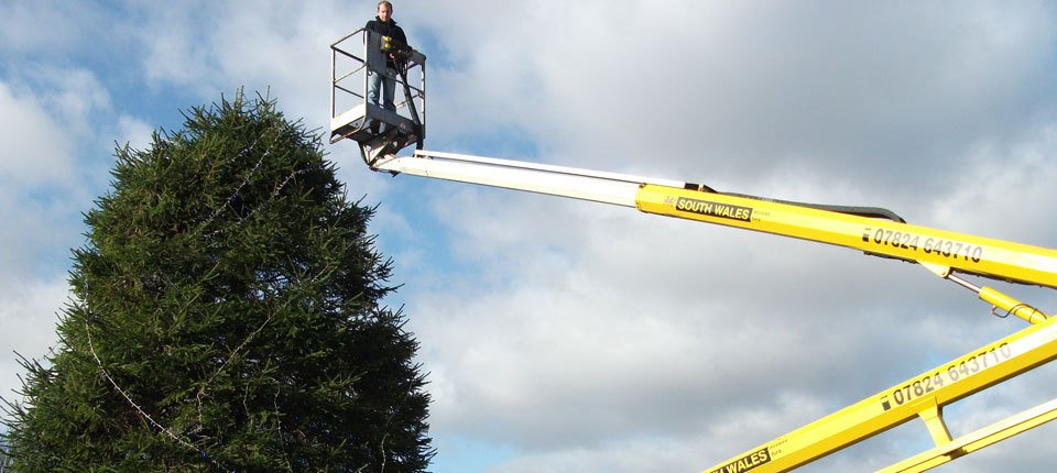 A tree surgeon using a cherry picker to investigate a tree