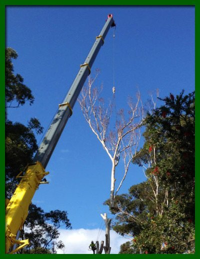 kingdoms tree care chopped tree top being lowered using a crane