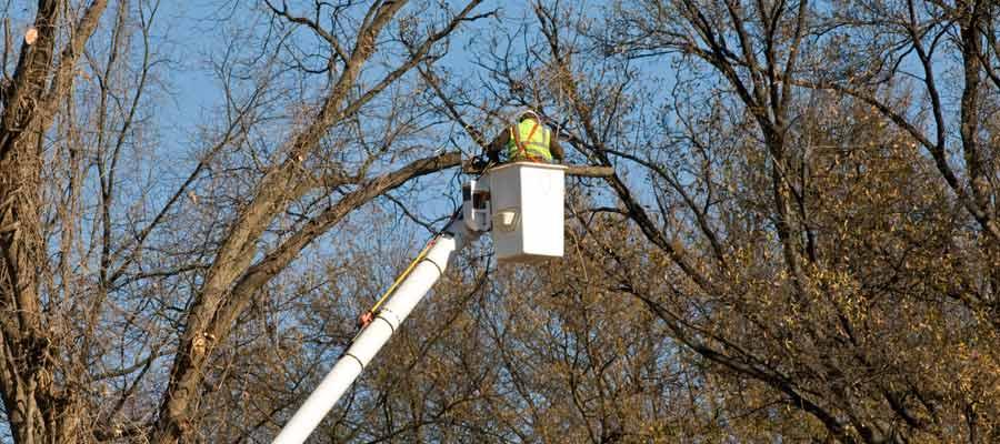 kingdoms tree care arborist using elevation equipment