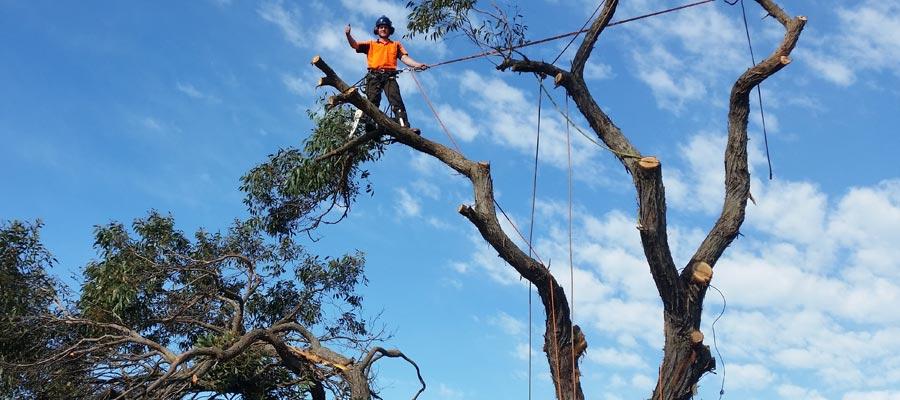 kingdoms tree care arborist on top of a tree