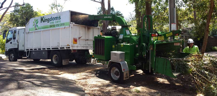 kingdoms tree care tree fed to wood chipper
