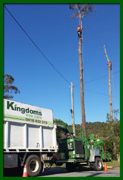kingdoms tree care arborist climbing a dead tree