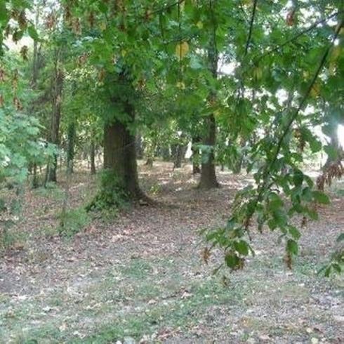degli alberi in un bosco