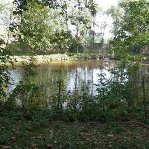 degli alberi e vista di un laghetto