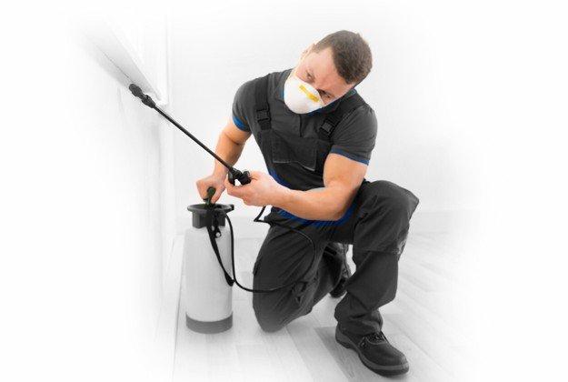 man spraying to get rid of bugs