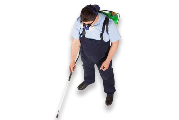 Man spraying for bugs