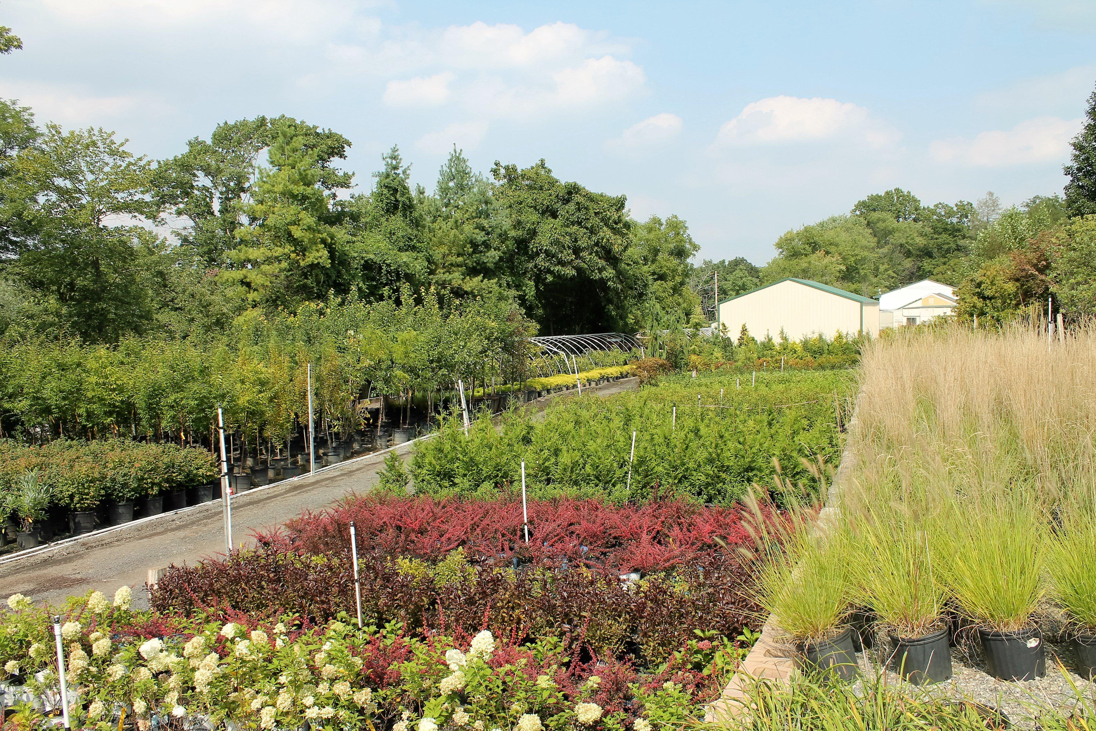 Mayfield Gardens Inc, Landscape Design