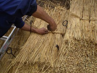Straw thatching