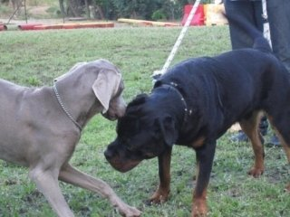 addestramento cani in corso