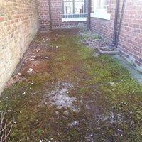 Backyard clearance