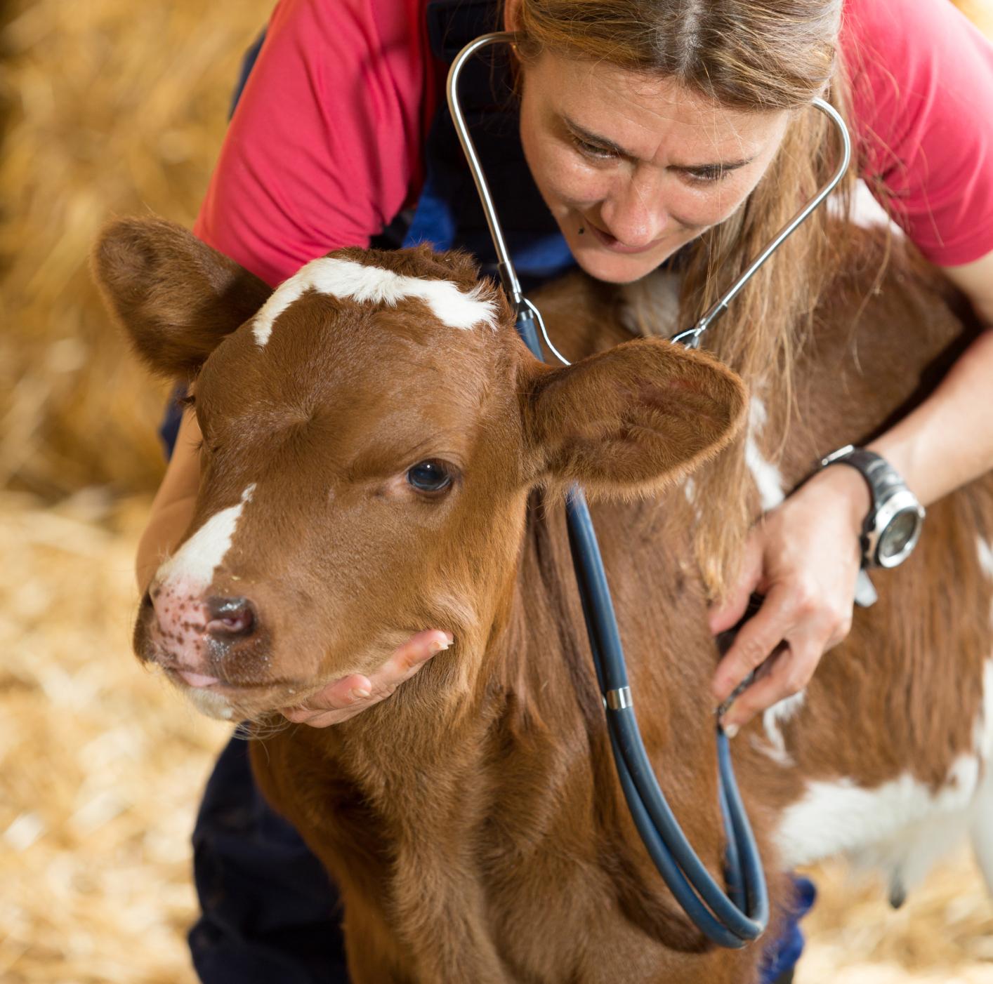 Pet Clinic & Hospital, Abilene, TX