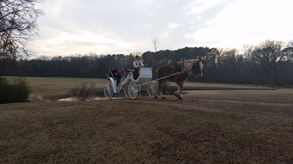 horse drawn carriage for a wedding in arkansas