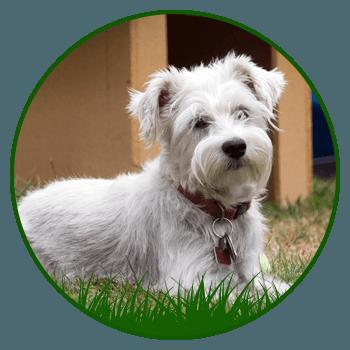 Dog Boarding Kennels Gateshead