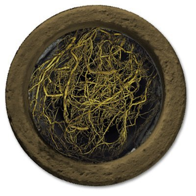 Roots Can Block Or Severely Damage Your Drainage Pipes