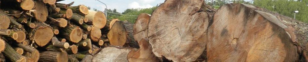 legna in tronchi