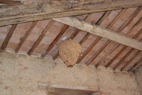 un alveare con delle api in un sottotetto