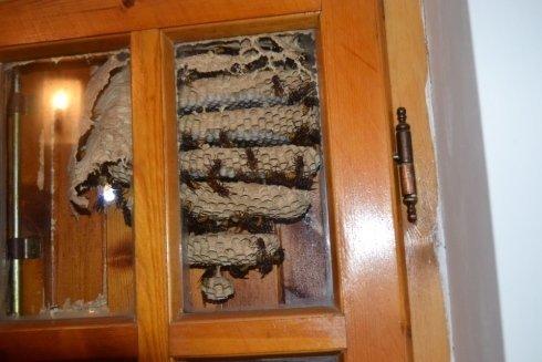 degli alveari di api dietro un armadio