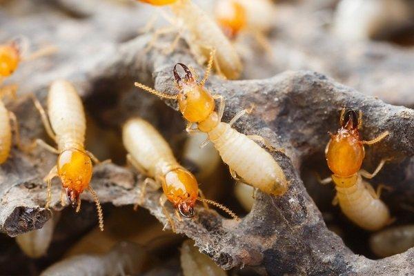 degli insetti su dei rami di legno