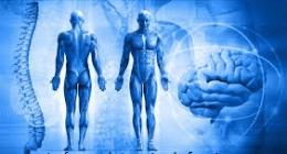metodo mezieres, posturologo, muscoli antigravitari