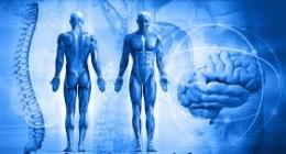 scuole della schiena, rieducazione funzionale del piede, neurologia