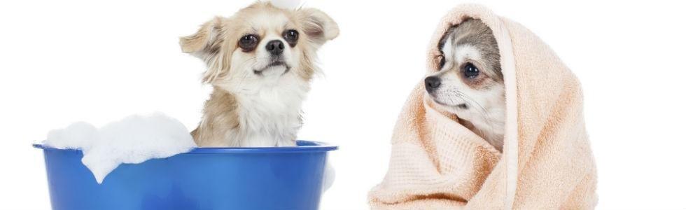 toeletta cani