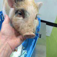 visite ortopediche animali