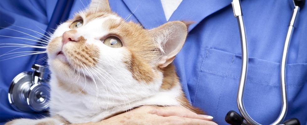 veterinario animali