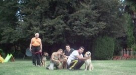torinodoggie asilo pensione dogsitter torino