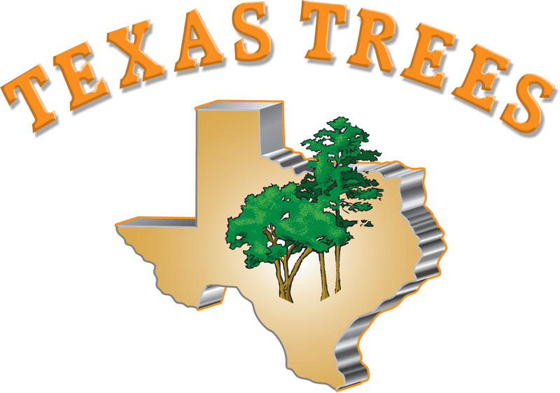 Texas trees tree service san antonio tx tree trimming tree service san antonio tx sciox Choice Image