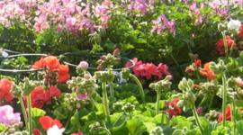 prodotti Giardinaggio
