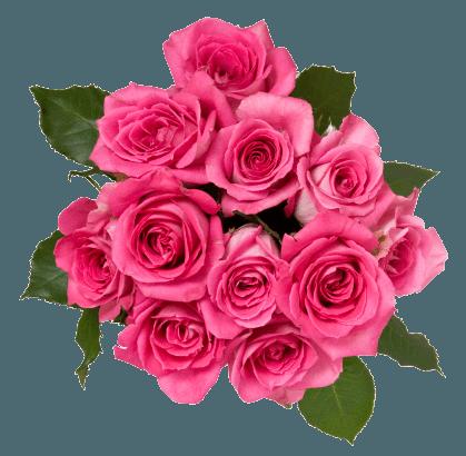floricoltura panetto