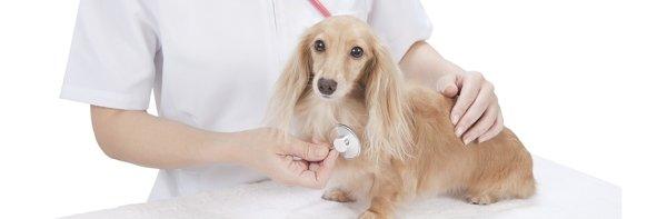 veterinaria