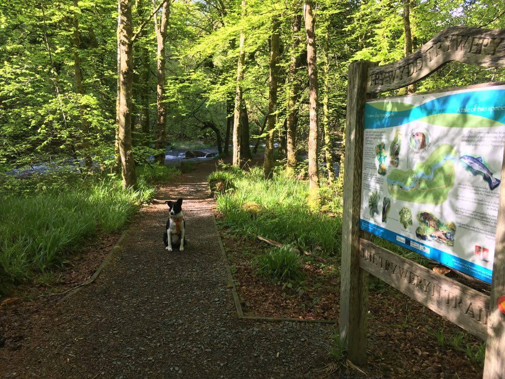 Dog walk route in Snowdonia