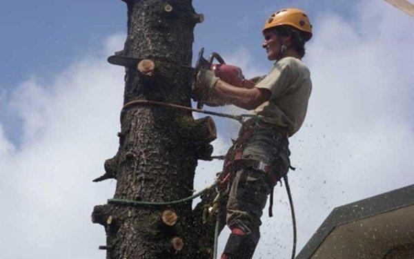 servizio di tree climbing