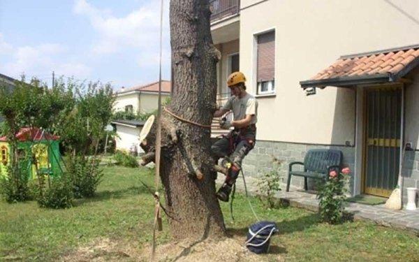 tree climbing maj dire giardini