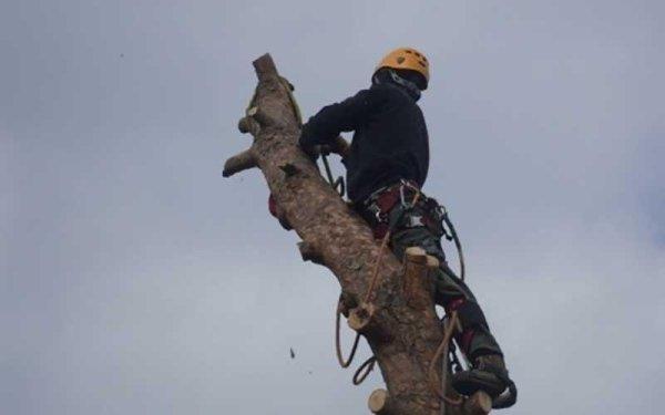 servizio abbattimento alberi