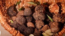 pappardelle al cinghiale, stinco di maiale, funghi porcini