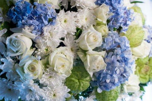 Fiori blu e bianchi