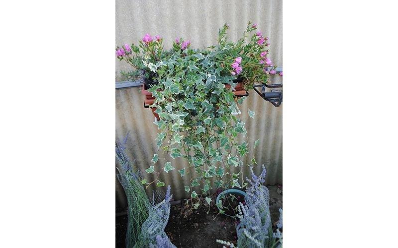piante per balcone