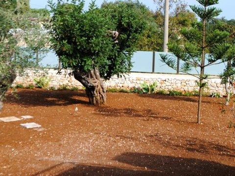realizzazione parchi comunali