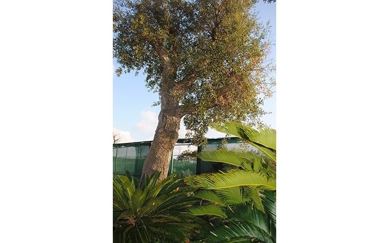 vendita alberi