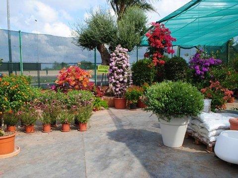 giardini e terrazzi