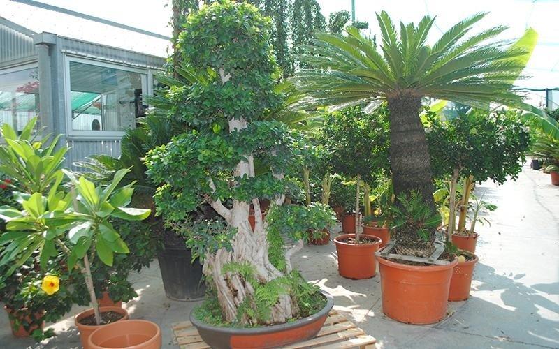 ampia scelta di piante