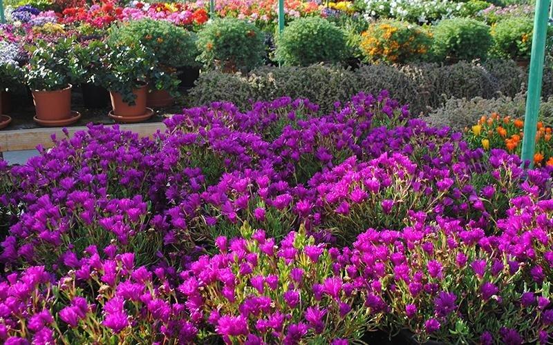 fiori primaverali