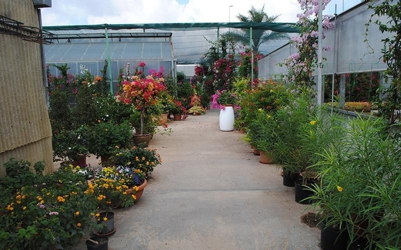 piante per bordure