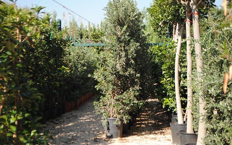 vendta piante bari