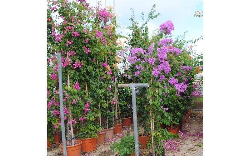 vendita arbusti