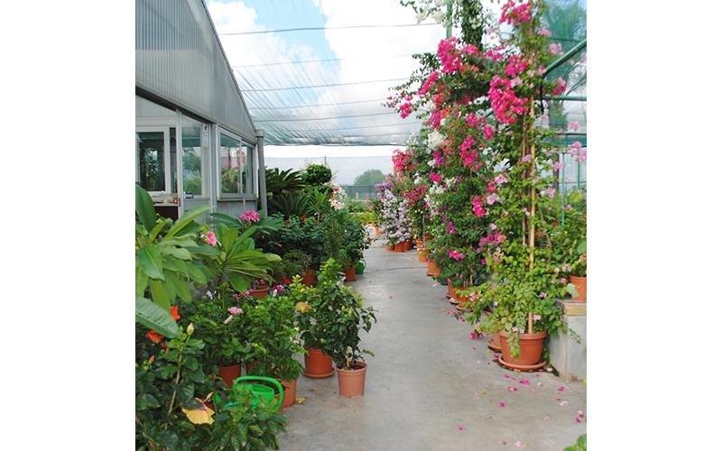 piante per appartamento