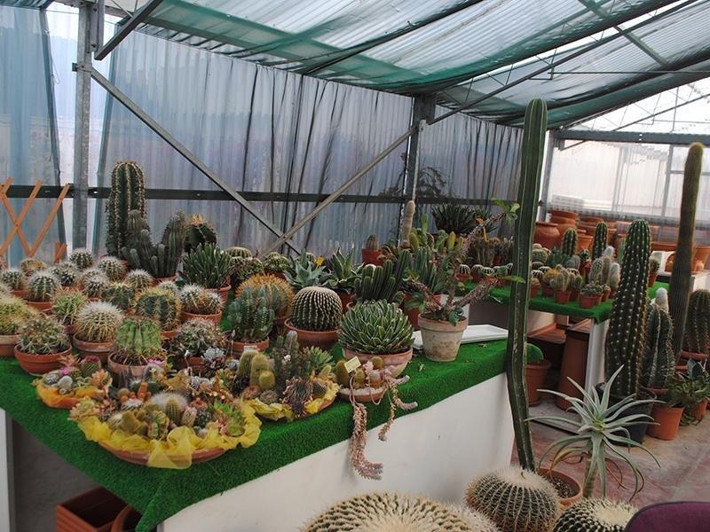 Piante grasse vendita vendita di piante e fiori for Vendita piante grasse on line